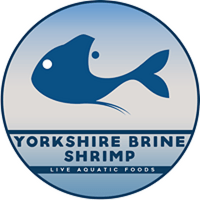 Yorkshire Brine Shrimp